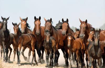 Calendario Fiera Montichiari.Calendario 2019 Mostre E Fiere Anam Cavallo Maremmano